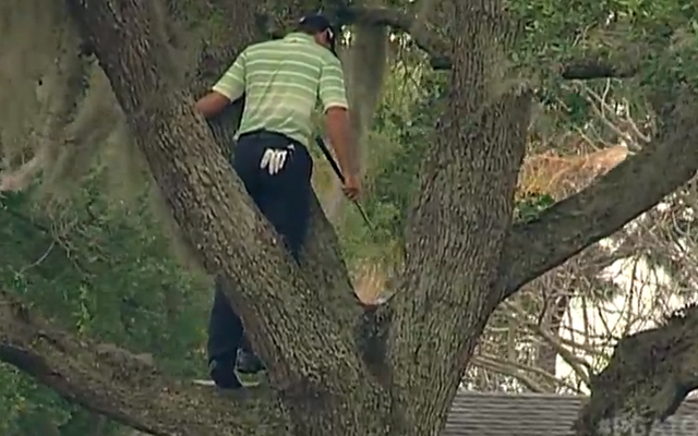 (Video) Sergio Garcia hits incredible golf shot out of a tree at Arnold Palmer invitational