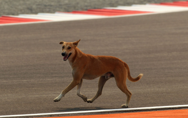 (Video) Must watch: Dog scores back post header!
