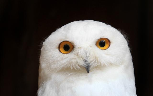 Arsenal legend takes to Twitter to deny owl adoption