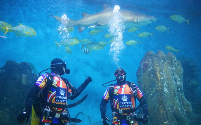 (Video) Melbourne Storm players dive with sharks before Cronulla game