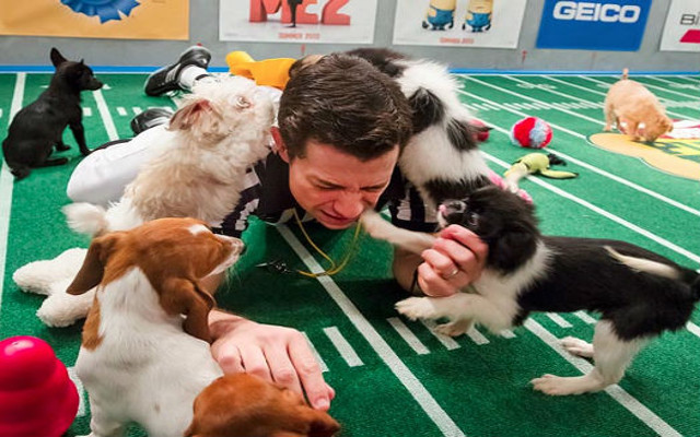 Puppy Bowl XI preview: PUPPIES, PUPPIES AND MORE PUPPIES!