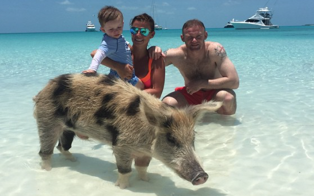 Wayne Rooney swims with pigs! Man United star shares fun family holiday photo