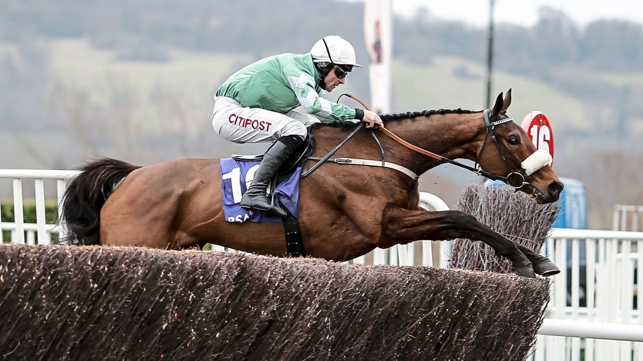 Cheltenham 2019 – Presenting Percy for Gold Cup